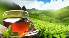 Zľava 50%: Ručne zbieraný zelený čaj z Vietnamu v 200 g balení za 2,39 €. Spoznajte jeho tisíc rokmi overené liečivé účinky a využite ich pre svoje zdravie a lepšiu kondíciu každý deň!