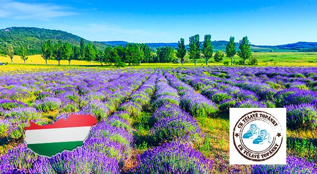 Fotka zľavy: Jedinečný zájazd na levanduľový festival v dedinke Tihany na Balatone a návšteva romantického kaštieľa v Keszthely len za 25 €. Nechajte sa uniesť omamnou vôňou výnimočnej fialovej rastlinky!