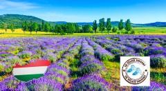 Zľava 55%: Jedinečný zájazd na levanduľový festival v dedinke Tihany na Balatone a návšteva romantického kaštieľa v Keszthely len za 25 €. Nechajte sa uniesť omamnou vôňou výnimočnej fialovej rastlinky!