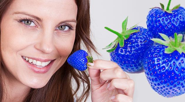 Fotka zľavy: Vypestujte si netradičné modré jahody u seba na záhrade či na balkóne - 10 semiačok s urýchľovačom rastu len za 2,49 €. Prekvapte svojich blízkych dezertom z originálneho ovocia!