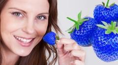 Zľava 45%: Vypestujte si netradičné modré jahody u seba na záhrade či na balkóne - 10 semiačok s urýchľovačom rastu len za 2,49 €. Prekvapte svojich blízkych dezertom z originálneho ovocia!